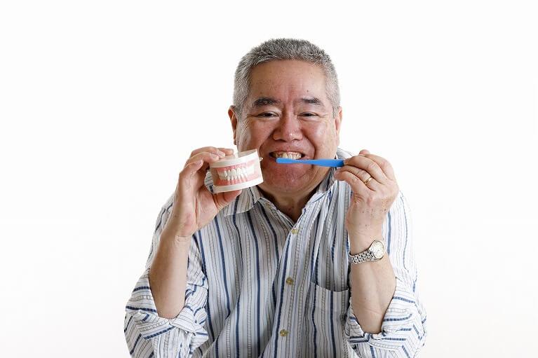 天然歯のように磨ける